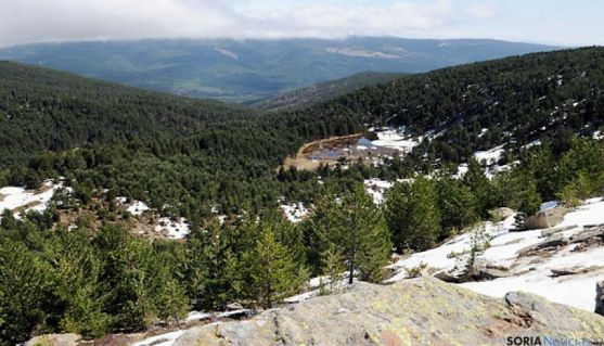 Imagen de un bosque de Pinares en Soria. / SN