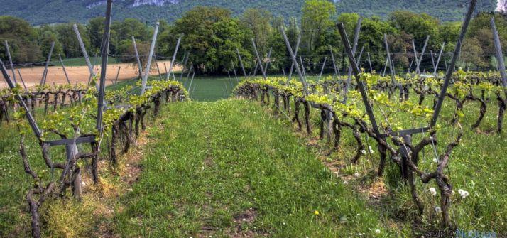 Imagen de un viñedo. / SN
