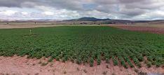 Cultivos de patata ecológica en Añavieja. / GM