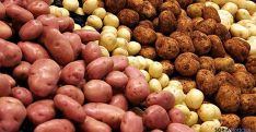 Diversas variedades de patata. / SN