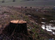 Foto 4 - Asden denuncia la tala de chopos en el Cañón del Río Lobos