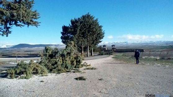 La caída de los árboles ha provocado el cierre de Numancia.