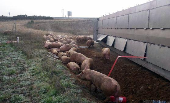 Los animales supervivientes del accidente al lado del vehículo. / SN