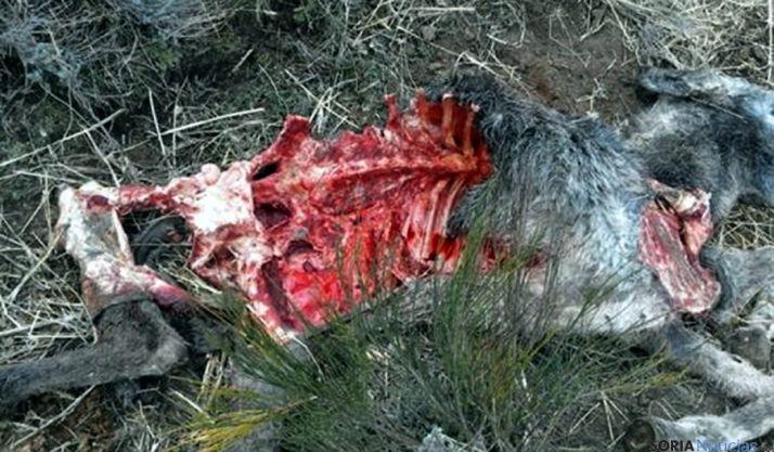 Restos del animal tras ser atacado./SN