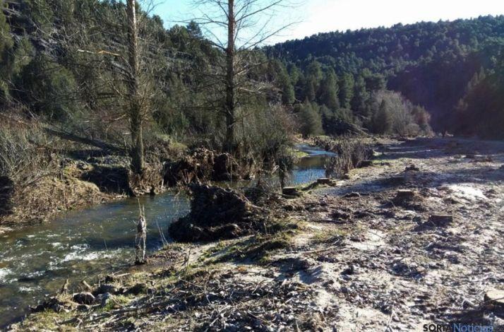 Foto 2 - Asden denuncia la tala de chopos en el Cañón del Río Lobos
