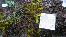 Una de las plantas de la muestra.