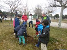 Plantación de árboles en Tardelcuende