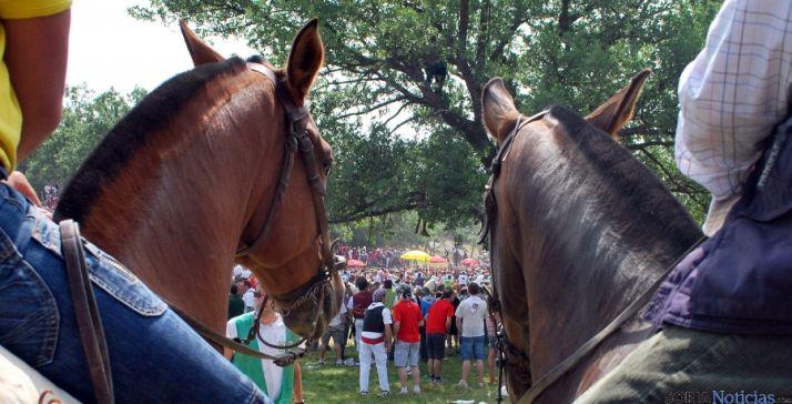 Dos caballos en el día de La Saca. / SN