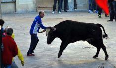 Un encierro de ganado bravo en las calles de Ágreda el año pasado. / SN