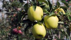 Manzanas producidas en la provincia./SN