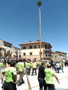 Pingada del Mayo 2016 de Cabrejas del Pinar