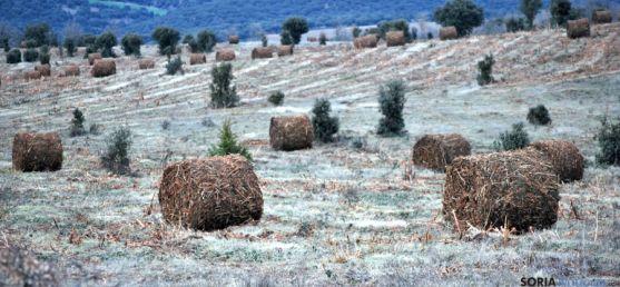 Pacas de jara para biomasa en el término de Reniblas. / SN