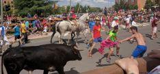 Novillos en las calles de Soria