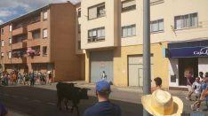 Novillo en las calles de Soria