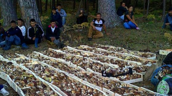 Recolectores ilegales con hongos tras ser interceptados en un monte de la provincia./SN