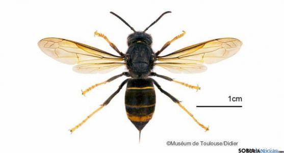 El insecto no avanza en la Comunidad como en otros territorios.