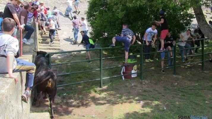 Un novillo trata de escaparse de Cañada Honda
