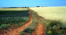Un camino rural en la provincia./SN