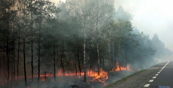 Un pinar ardiendo en una imagen de archivo. / SN