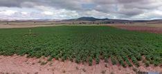Un campo de patatas entre Matalebreras y Añavieja. / SN