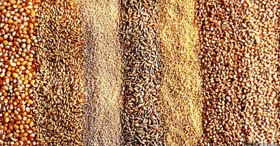 Varios tipos de semillas. / SN