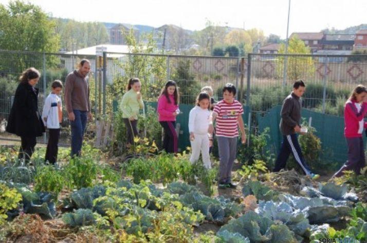 Huerto escolar en un centro de la Comunidad