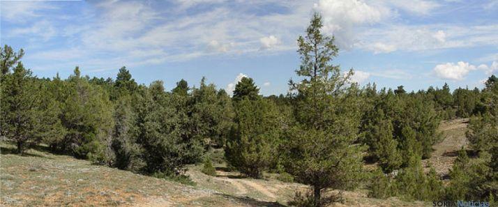 Monte de Herrera de Soria.