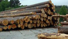 Pilas de troncos listos para una subasta./SN