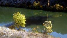 La mancha oscura del vertido en las aguas del Duero. / ASDEN