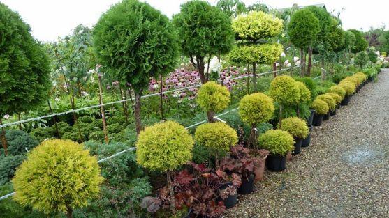 Las didácticas han girado en torno a la jardinería./SN