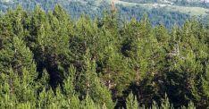 Superficie boscosa en Pinares. /SN
