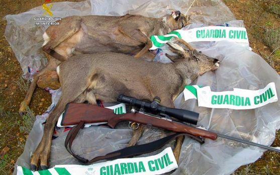 Dos piezas y un arma incautadas en la operación./GC