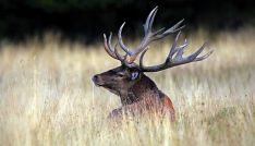 Un ciervo este verano en la provincia./SN