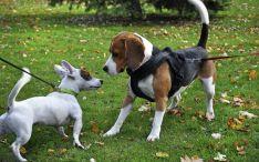 Dos perros juegan en un parque./SN