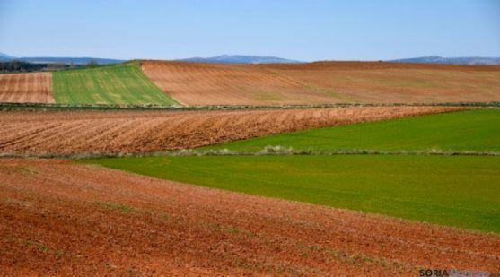 Parcelas agrícolas en la provincia de Soria. / SN