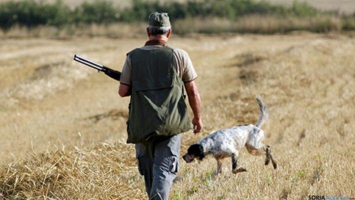 Imagen de un perro de caza/ SN