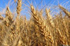 Imagen del cereal/ SN