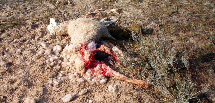 Una de las reses muertas al parecer por los ataques./UCCL