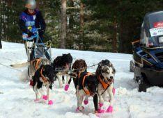 Sara Armendariz con sus perros este jueves.
