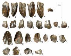 Imagenes de los trabajos y de los restos fósiles de 'Magnamanus soriaensis'