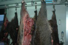 Piezas de caza sin los precintos, según el SEPRONA. /Subdelg