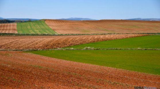 Terrenos de labor en la provincia de Soria. /SN