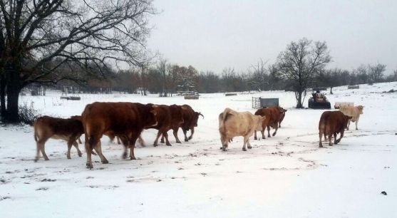 Imagen de Valonsadero tras la última nevada. /SN