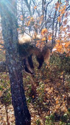 El cadáver colgado de un árbol./AMAR