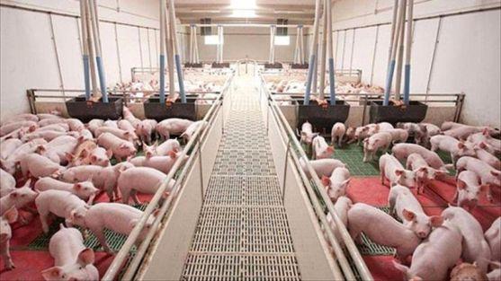 Granja de porcino de Castilla y León.