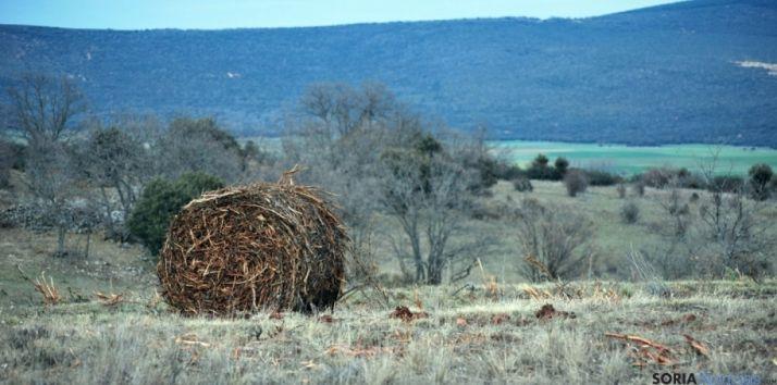 Pacas de biomasa en un monte de la provincia. /SN