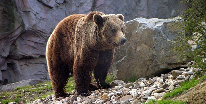 Un ejemplar de oso.
