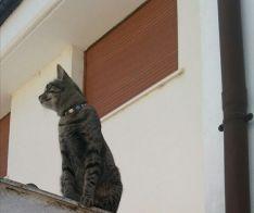 Kelpie, la gata perdida en Almazán.