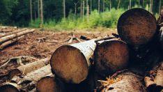 Tiene la mayor superficie certificada y este año suma 22.000 nuevas hectáreas.