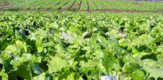 Una explotación agrícola en la provincia. /SN